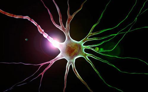 神经胶质 饥饿感 饥饿感